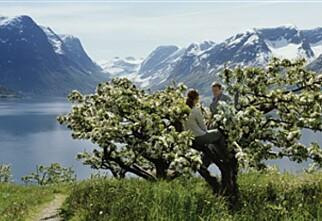 Dette skal Norge markedsføre seg med