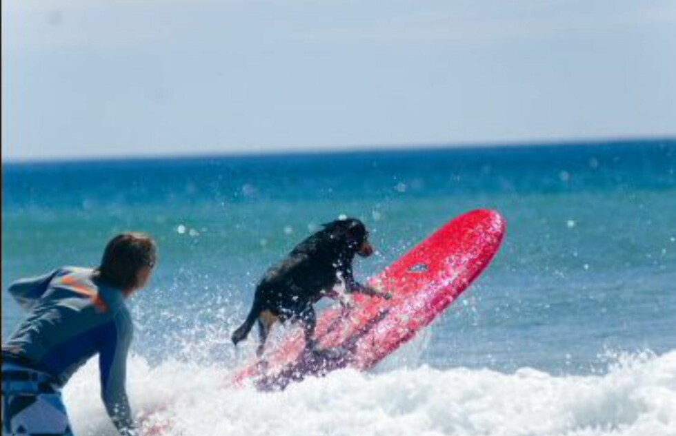 George har surfet siden han var valp. Foto: Black Dog Surf School