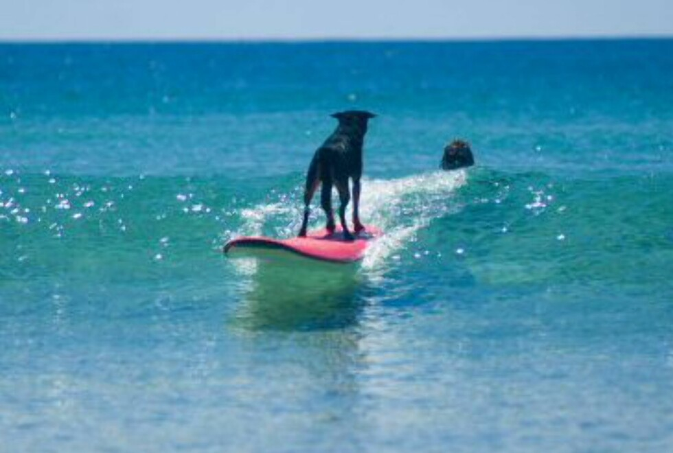 Det er baklengssurfing som gjelder for George. Foto: Black Dog Surf School