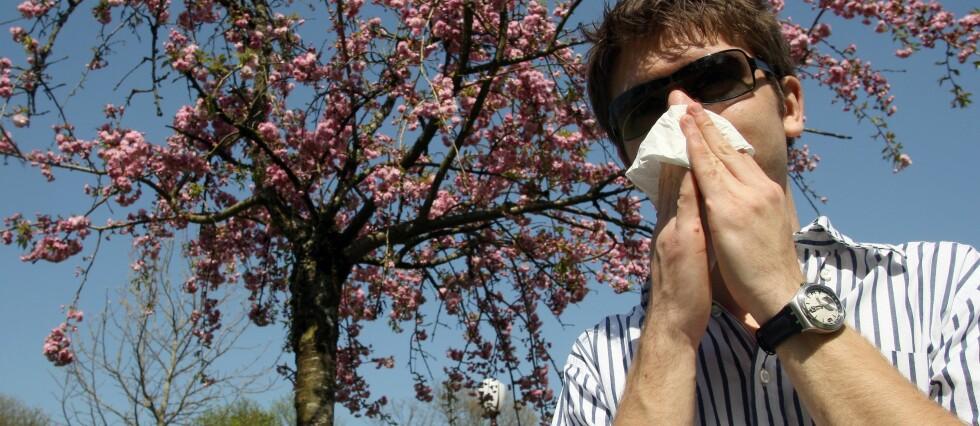 Ifølge Norges Astma- og Allergiforbund finnes det nærmere 900.000 pollenallergikere i Norge, Foto: Colourbox.com