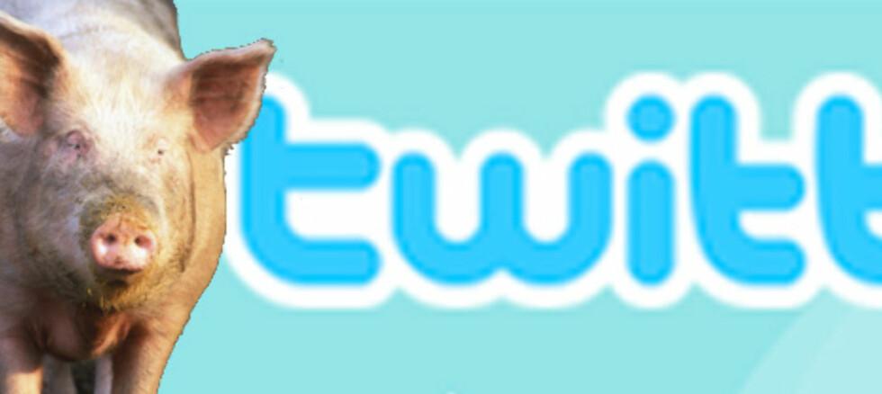 Den populære mikrobloggingstjenesten Twitter skaper kaos og hysteri, melder CNN. (Montasje: Colourbox/twitter.com)