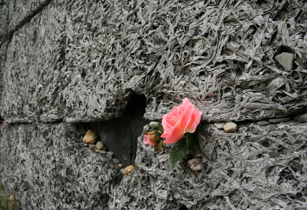 En blomst festet i henrettelsesveggen. Småsteinene er plassert der i henhold til jødisk skikk. Foto: Sindre Storvoll