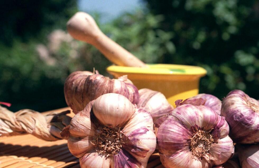 Hvitløken bør knuses før du tilsetter den i maten, for å frigjøre de helsebringende stoffene. Foto: Colourbox