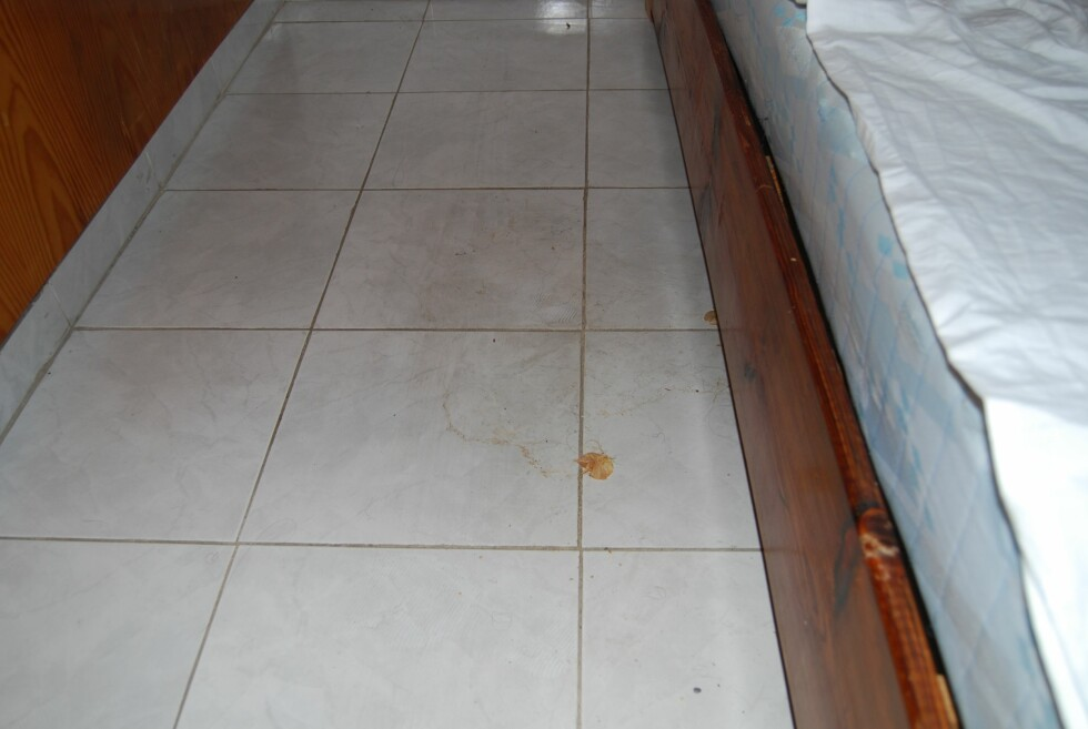 Det var tydelige, møkkete flekker på gulvet ved sengen. Foto: Henning Svendsen