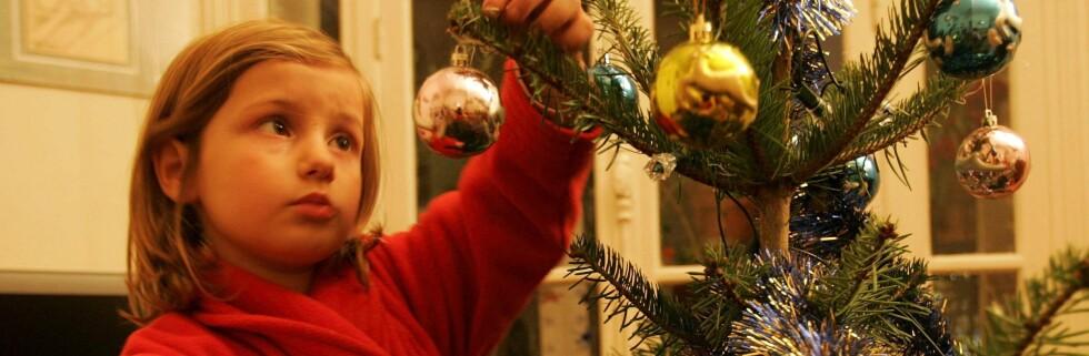 På Norsk gran vokser grenene lett oppover.  Foto: Colourbox.com