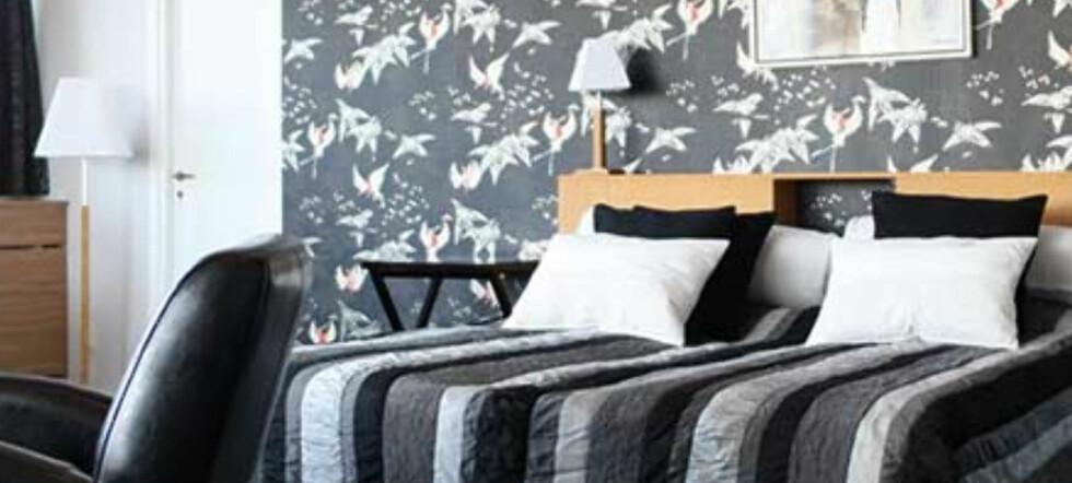 Et vanlig dobbeltrom koster 700 kr, mens denne lekre suiten med boblebad og terasse koster 1.400 kr natta. Foto: STF Fridhemsplan