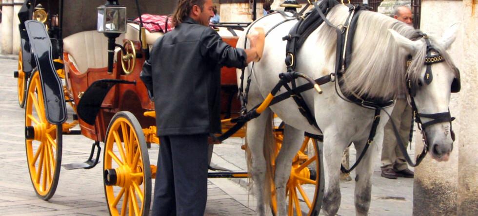 Livet er ingen dans på roser for hestedrosjene som kjører turister rundt i storbyene. Foto: Sue Anna Joe