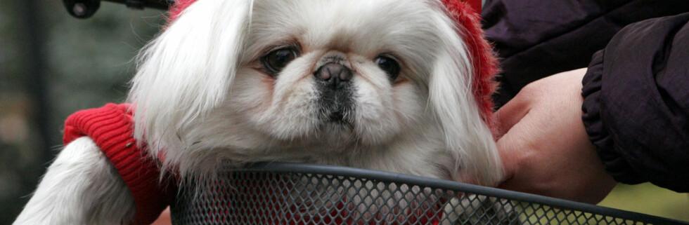 Motehunder smugles inn i stor stil, men ikke kjøp, råder ekspertene! Foto: Colourbox.com