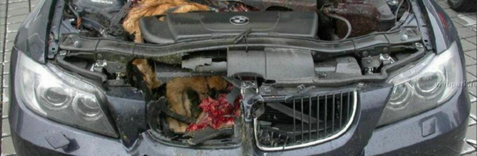 BMW slukte dyr