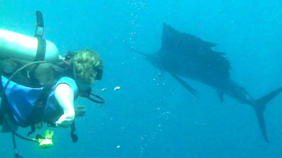 Se videoen som Beckers tok av sverfisken som kjekket lengre ned i saken. Han annslo den til å være flere hundre kilo tung.   Foto: Robert Beckers