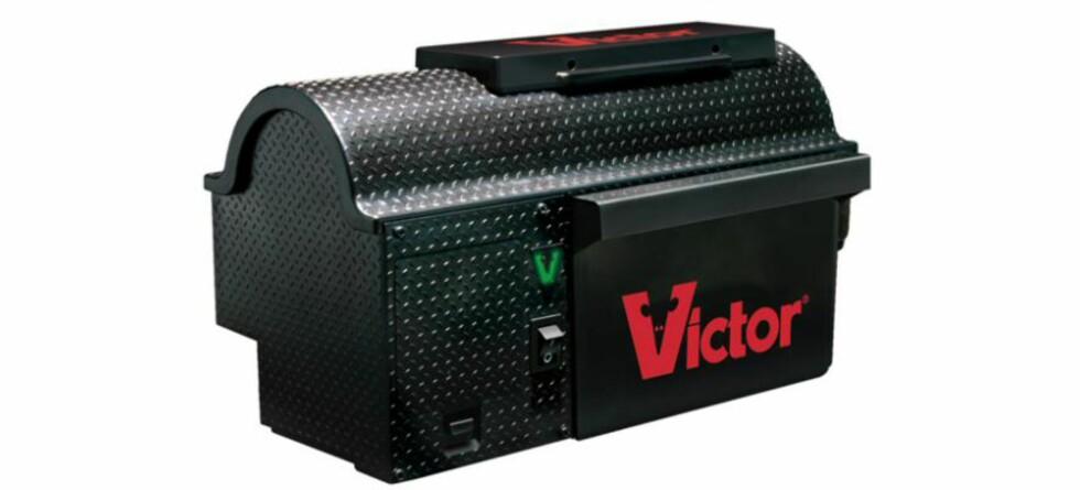 Om vinteren blir mange offer for et gnagende problem ... Foto: victorpest.com