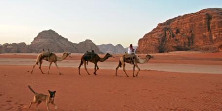 Fly til Jordan for under 2.000 kr
