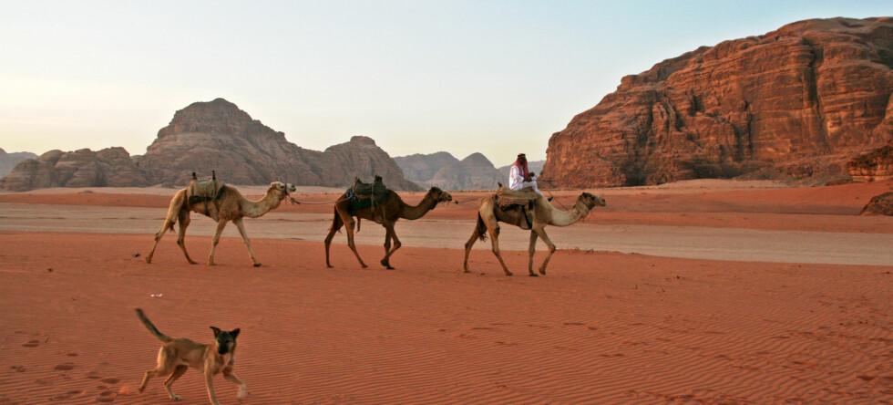Vil du ha en annerledes, eksotisk ferietur? Reis til Jordan, nå er det billig! Foto: Stine Okkelmo