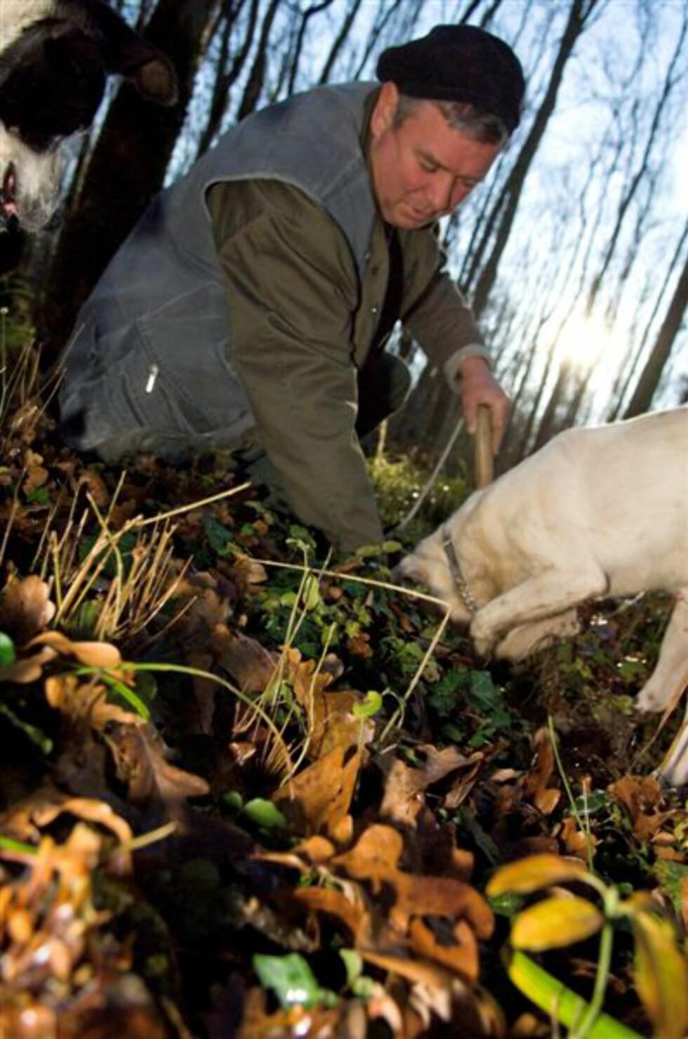 Trøffeljakt med hund.  Foto: Istria Tourist Board