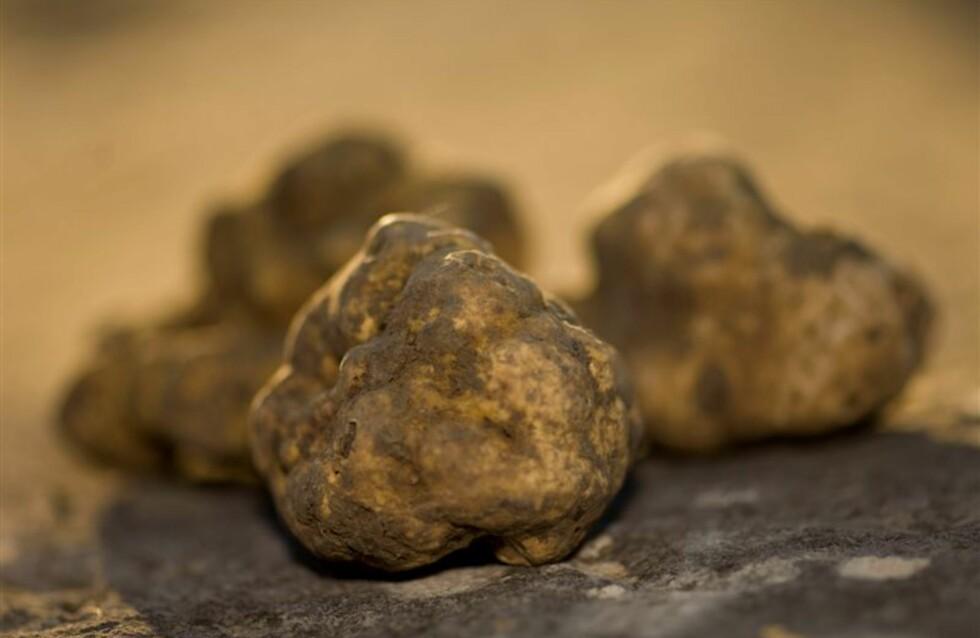 Slik ser trøffelen ut etter at jorden har blitt børstet av. Foto: Istrian Tourist Board
