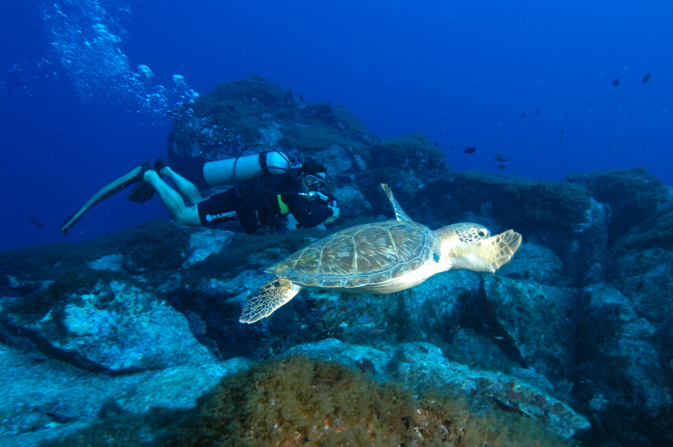 Vil du svømme med skilpadder i Brasil - nå har du muligheten til å gjøre det rimelig.  Foto: Hans Kristian Krogh-Hanssen