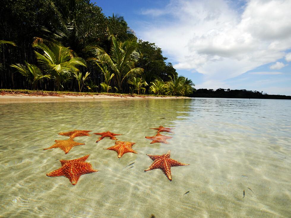 Starfish Beach er utrolig vakker med tusenvis av sjøstjerner.  Foto: Hans Kristian Krogh-Hanssen