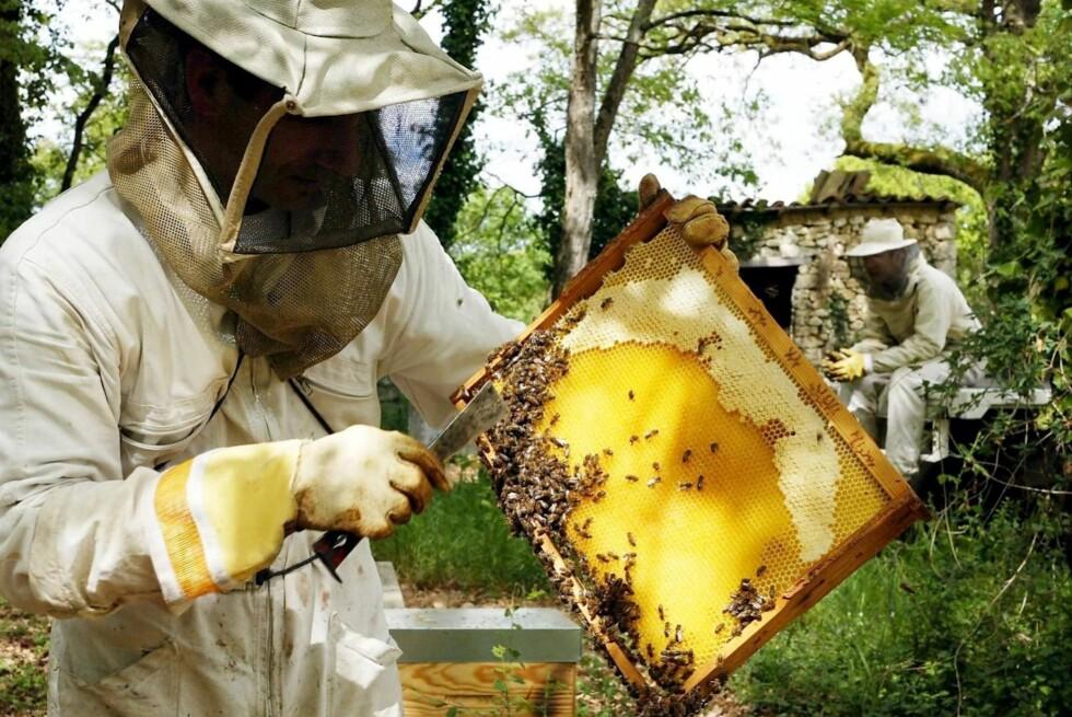 Forskere fra New Zealand har påvist at honning virker gunstig mot brannskader.  Foto: Colourbox