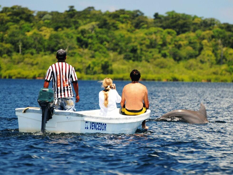 I Bocas del Toro kryr det av delfiner. Du kan se opp til flere hundre om gangen om du er heldig.  Foto: Hans Kristian Krogh-Hanssen