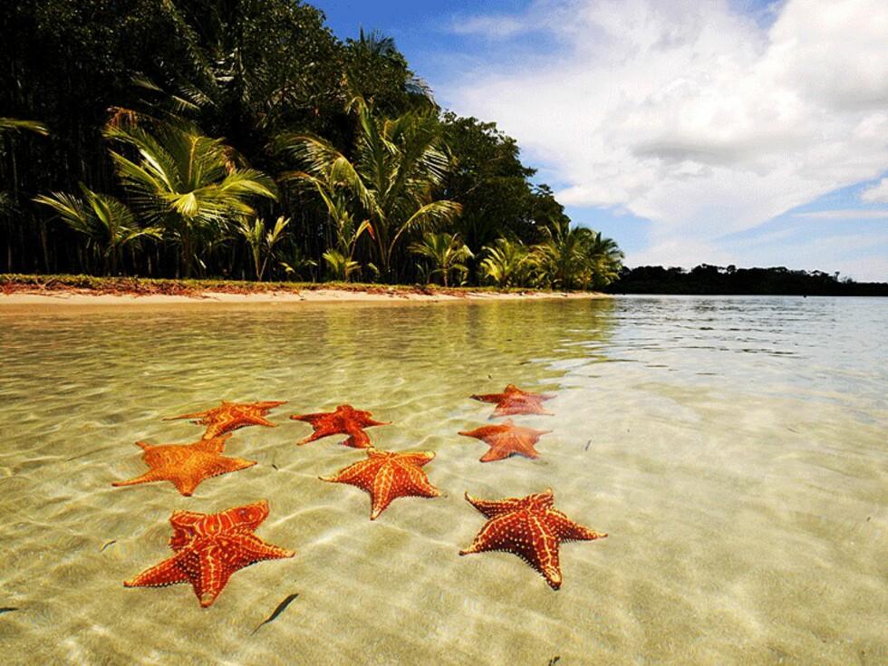 Starfish Beach i Bocas del Toro lever opp til navnet sitt.  Foto: Hans Kristian Krogh-Hanssen