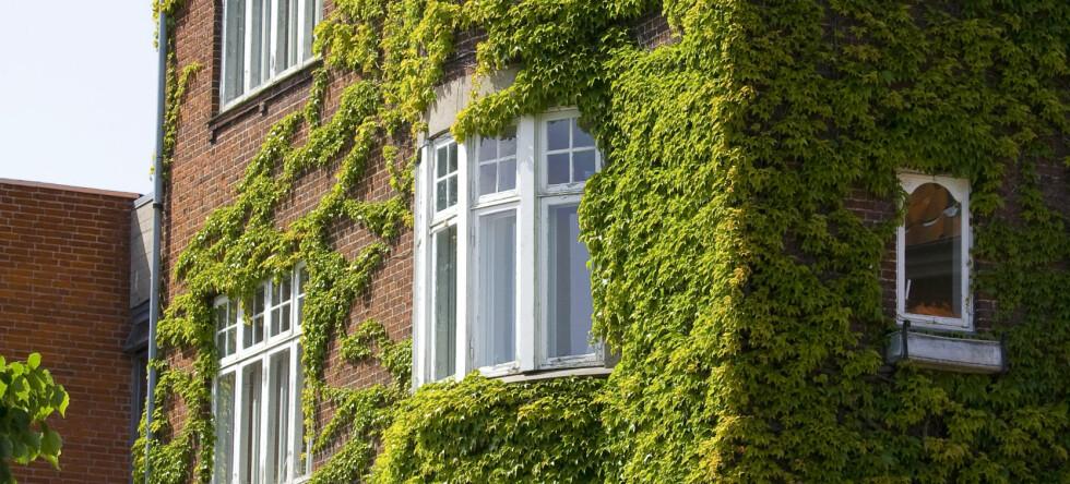 Boliger i Bergen, Trondheim og Stavanger falt mest det siste året, men holdt seg mest i verdi siden 2000.  Foto: Colourbox.com