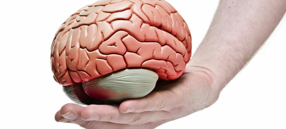Forskere hevder at nettsurfing er like god hjernetrim som det kryssord er.  Foto: Colourbox