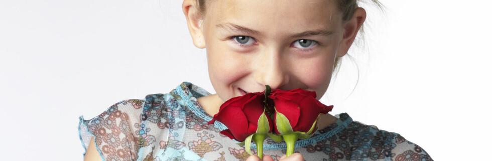 Roser dufter godt ... er de farlige? Foto: Colourbox