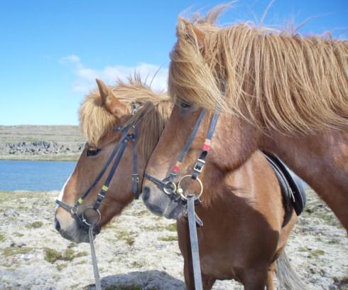 Opplev den uvanlige naturen på Island på hesteryggen. Foto: Ida Lindell/Stock.XCHNG