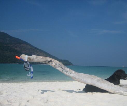 Palmesus, grønt vann, snorkling og puddersand. Hva mer enn dette kan du ønske deg? Foto: Astrid Mannion
