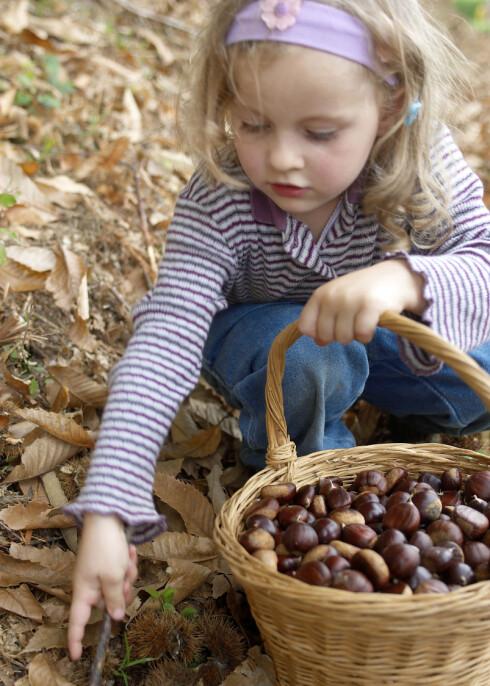 Ut og plukke nøtter, ut og plukke bær... Foto: colourbox.com
