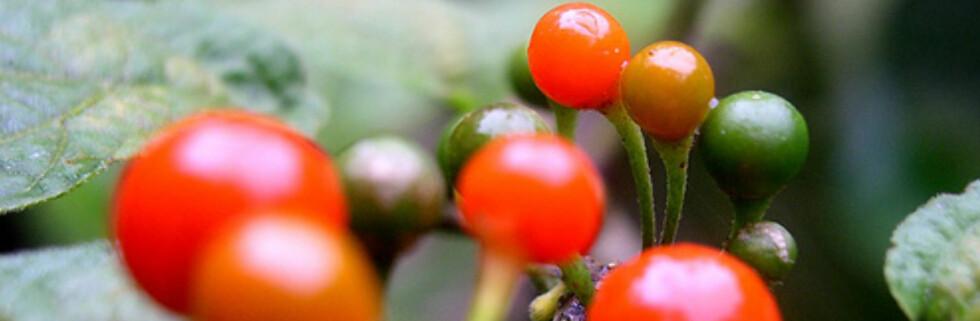 Kaffestrakt kan forbedre pigmenter og redusere rynker, ifølge amerikansk forskning