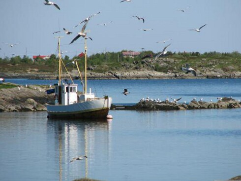 Tett på naturen. I bakgrunnen sees Fårøy. Foto: Marian Lie Johansen