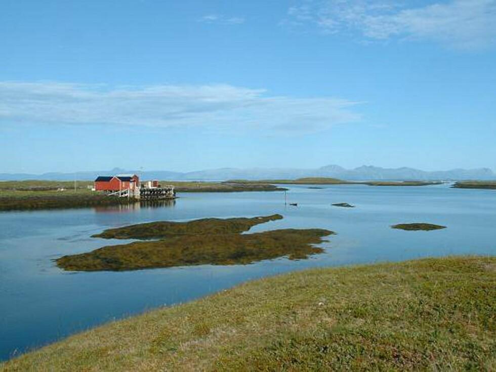 Fra Hysvær. Her ser du de typiske flate holmene og skjærene som utgjør øyriket.  Foto: Marian Lie Johansen