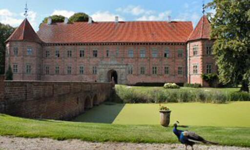 Selvsagt spankulerer det en påfugl rundt på et skikkelig slott. Her fra Voergaard Slot. Foto: Stine Okkelmo