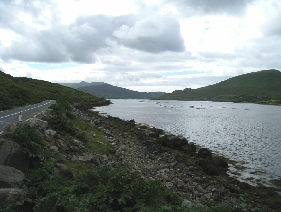 Veien slynger seg langs havkanten. Dette er for øvrig Killary fjord, Irlands eneste fjord. Foto: Stine Okkelmo