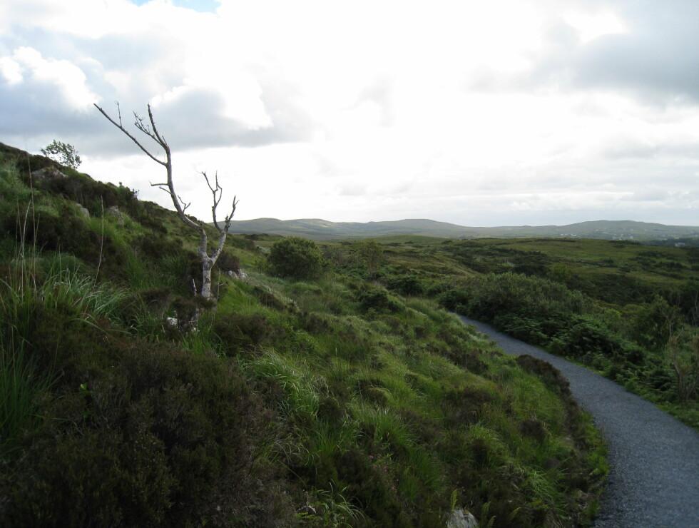 Før var dette landskapet dekket av skog, og lignet på vårt norske landskap. Da skogen ble hugget, tok heiene over. Foto: Stine Okkelmo