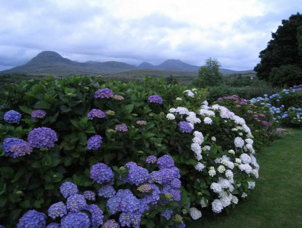 Hotellets hage har utsikt over nasjonalparken. Foto: Stine Okkelmo