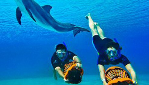Vann og livet i havet er temaer på Atlantis The Palm. Foto: Atlantis The Palm