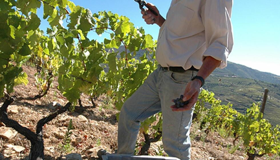 Lær alt om vinproduskjon på en reise til Douro.  Foto: Hans Kristian Krogh-Hanssen