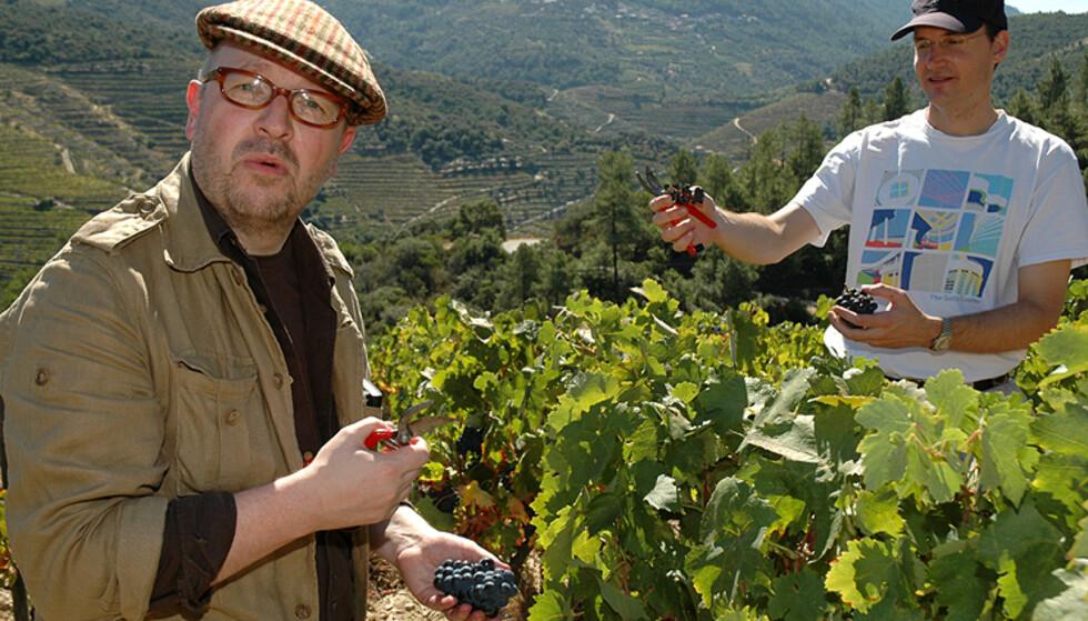 """To vinsmakere i god gang med å høste """"sine egne"""" druer.  Foto: Hans Kristian Krogh-Hanssen"""