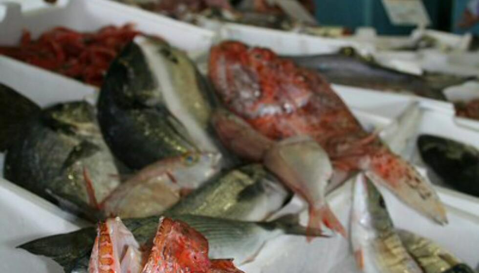 Fiske er en viktig næringsvei i Terracina, og mange butikker er derfor gode på fisk og sjømat. På fiskebutikken Lollo e Roberto Carpignoli, som er en av de største i byen, finner du alt fra reker og skjell til uidentifiserbare skapninger. Foto: Elin Fugelsnes