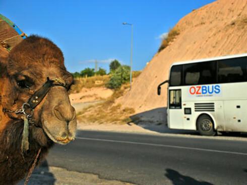 Den 18 uker lange turen fra London til New York er ingenting for de som plages av bilsyke... Foto: OzBus