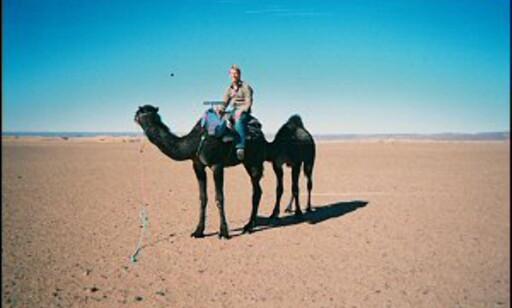 Dromedaren er nomadenes rofaste følgesvenn og arbeidsjern. Foto: Håkon Jarle