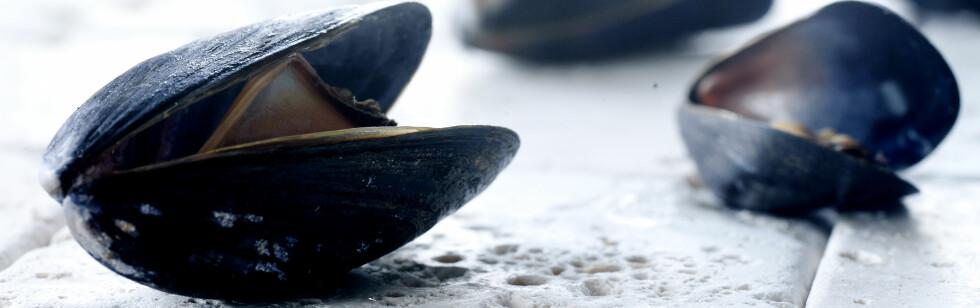 Sjekk de ukentlige blåskjellsvarslene før du putter skjellene i gryta, oppfordrer Mattilsynet. Illustrasjonsfoto: colourbox.com