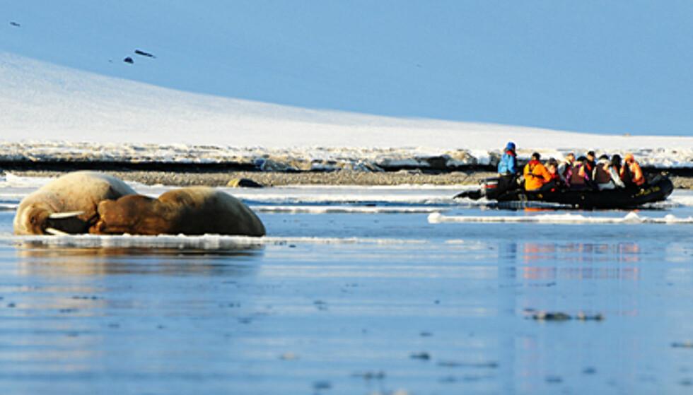 Utflukter i gummibåt gjør at du kan komme tettere på dyrelivet. Disse karene bryr seg mindre om turister.  Foto: Hans Kristian Krogh-Hanssen