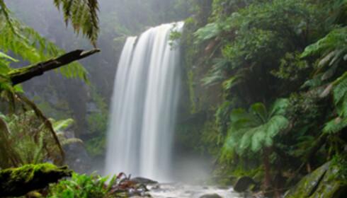 Hopetoun Falls ligger midt i Otway nasjonalpark. Foto: wikipedia.org
