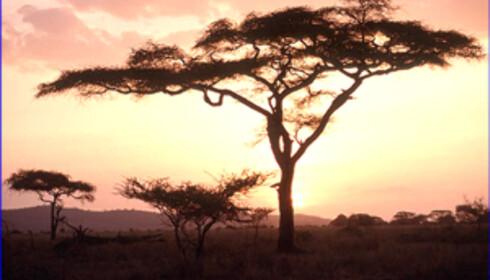 Det er ikke bare dyr som venter deg når du drar på safari. Omgivelsene kan være en attraksjon i seg selv - du har nok aldri opplevd noe lignende. Foto: Serengeti National Park