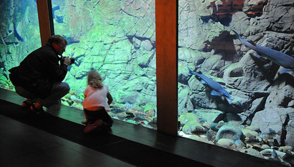 Naturmuseet byr på mye spennende for store og små.  Foto: Hans Kristian Krogh-Hanssen