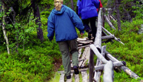 Ta hensyn til våtområdene og bruk broene, sier direktoratet for naturforvaltning Foto: Colourbox