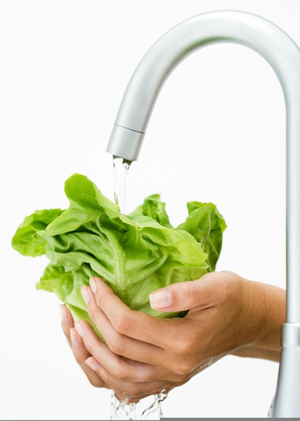 Selv om du vasker salaten godt, er den ikke hundre prosent trygg å spise. Illustrasjonsfoto: Colourbox.com
